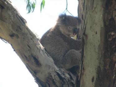 Australien_3